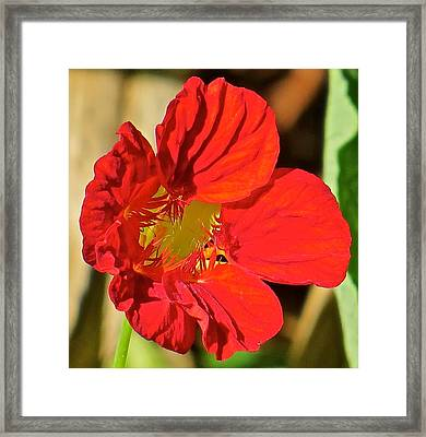 Flower 123 Framed Print by Patsy Pratt