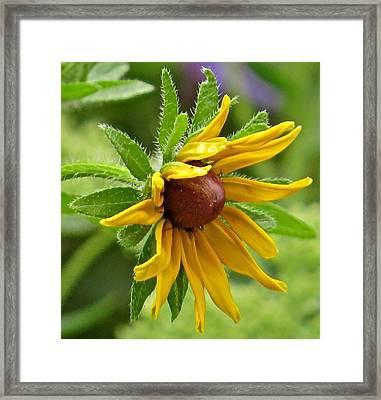 Flower 127 Framed Print by Patsy Pratt
