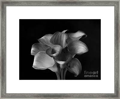 Flower #367 Framed Print