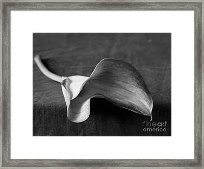Flower #383 Framed Print