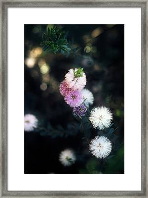 Flower 47 Framed Print