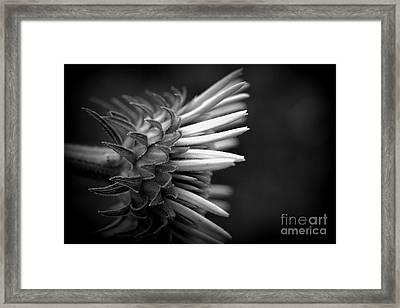 Flower 58 Framed Print