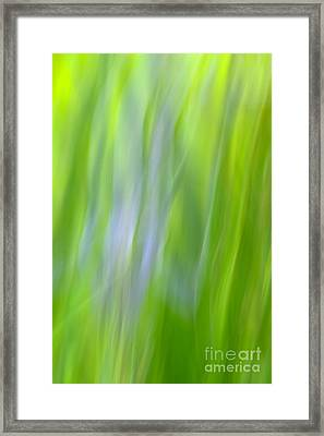 Flower Abstract Framed Print by Kelly Morvant