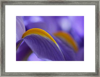Flower Abstraction Framed Print by Juergen Roth