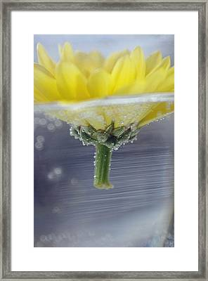 Framed Print featuring the photograph Flower Afloat by Adria Trail