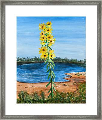 Flower Amidst Drought Framed Print