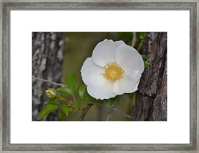 Flower And Bark Framed Print