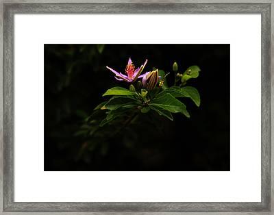 Flower And Bud Framed Print by Noel Elliot