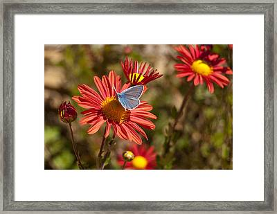 Flower And Butterfly Framed Print by Mariana Atanasova