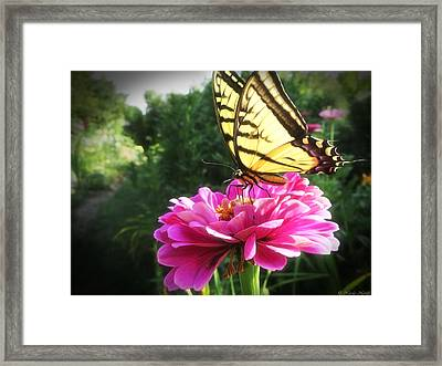 Flower And Butterfly Framed Print by Nicola Nobile