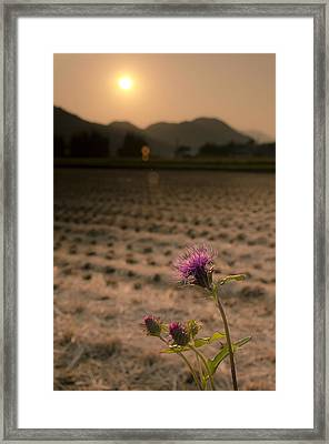 Flower And Field Framed Print