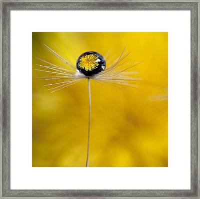 Flower And Seed Framed Print