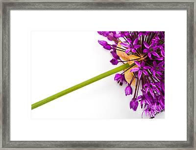 Flower At Rest Framed Print