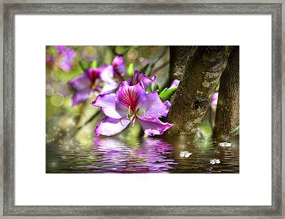 Flower Bauhinia And Simulation Of Water Framed Print