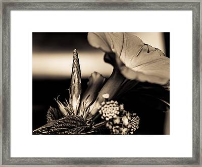 Flower Beauty II Framed Print by Marco Oliveira