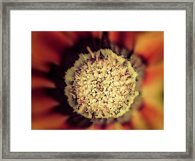 Flower Beauty Iv Framed Print by Marco Oliveira