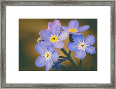 Forget Me Nots Framed Print by Marco Oliveira