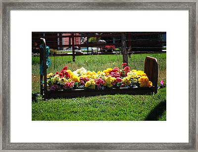Flower Bed Framed Print by Holly Blunkall