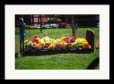 Flower Flowers Bed Iron Cast Dirt Colorful Grass Garden Fence Huntsville Framed Prints