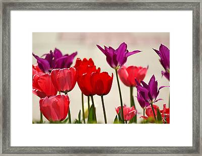 Flower Bed Framed Print