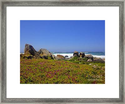 Framed Print featuring the photograph Flower Bed by Sarah Mullin