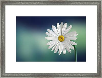 Flower Framed Print by Bess Hamiti