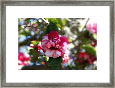 Framed Print featuring the photograph Flower by Bill Howard