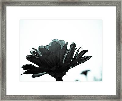 Flower Bloom Framed Print by Paige Sims