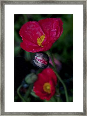 Framed Print featuring the photograph Flower Bud by Haleh Mahbod