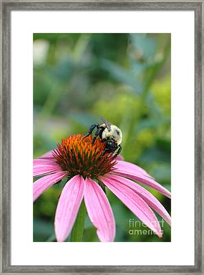 Flower Bumble Bee Framed Print by Jt PhotoDesign