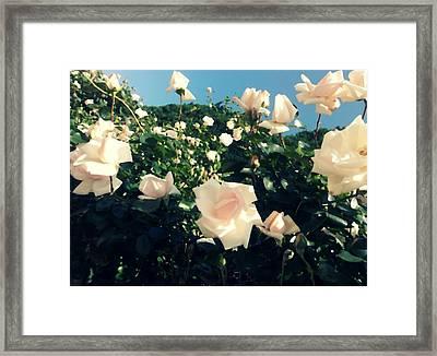 Flower Bush  Framed Print by Kiara Reynolds