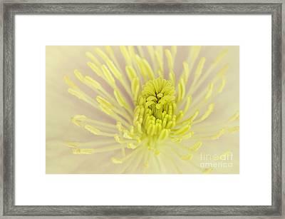Flower Centre Framed Print by Svetlana Sewell