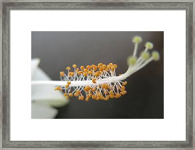 Flower Closeup Framed Print by Rohit Jadav