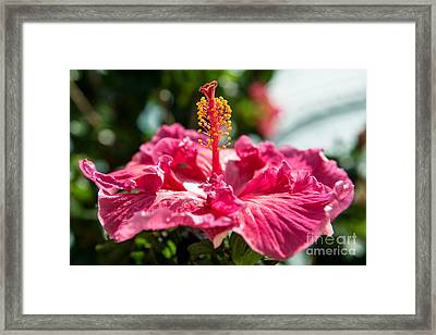 Framed Print featuring the photograph Flower Closeup by Yew Kwang