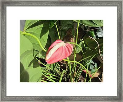 Flower Color Framed Print