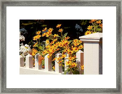 Flower - Coreopsis - The Warmth Of Summer Framed Print by Mike Savad