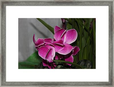Framed Print featuring the photograph Flower by Cyril Maza