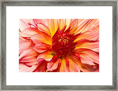 Flower - Dahlia - Natures Breath Taker Framed Print by Mike Savad