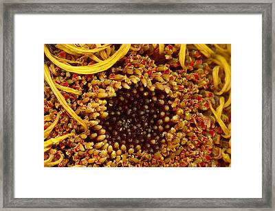 Flower - Daisy - In Other Worlds Framed Print by Mike Savad