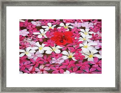 Flower Decoration, Udaipur, Rajasthan Framed Print by Keren Su