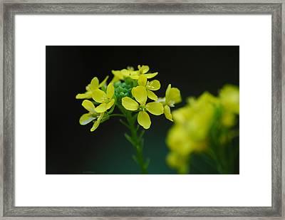 Flower Framed Print by Diaae Bakri