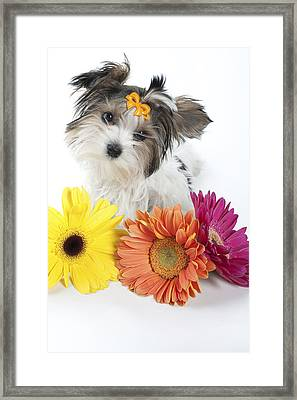 Flower Doggie Framed Print