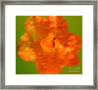 Flower Framed Print by Dorothy Rafferty