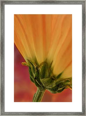 Flower Dream I Framed Print