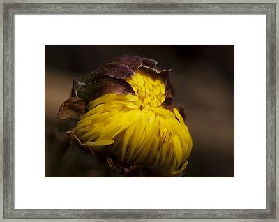 Flower Dream IIi Framed Print