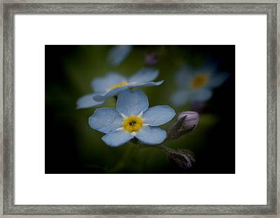 Flower Dream Iv Framed Print