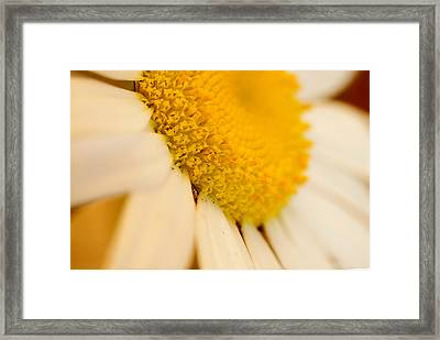 Flower Dream V Framed Print