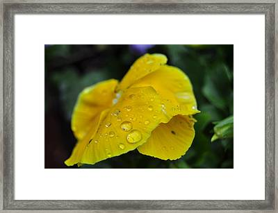 Flower Droplets Framed Print