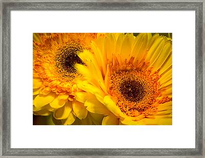 Framed Print featuring the photograph Flower Eyes by Steven Santamour