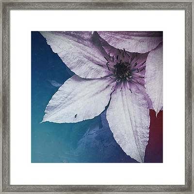 Flower Fade Framed Print by Tommy Wallace